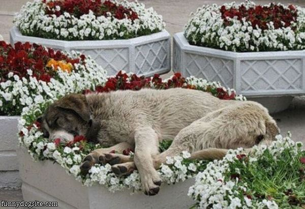 dog-in-flower-bed